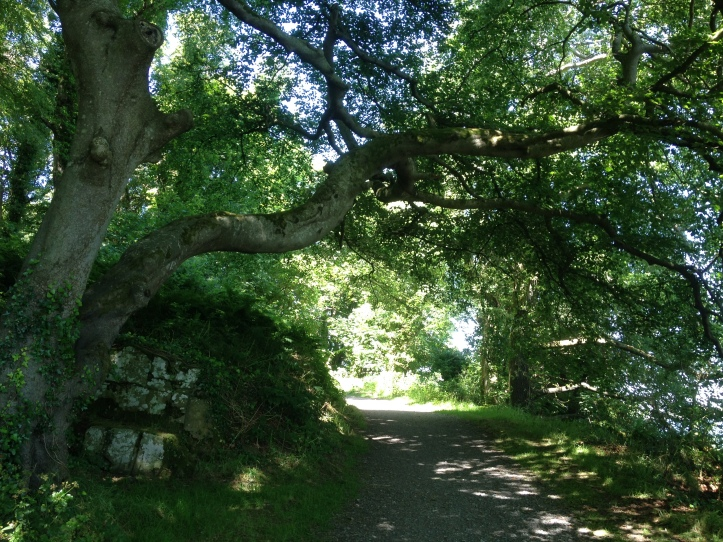 The Hanging Tree. Castle Ward estate boasts several Game of Thrones filming locations making it a must-see destination on any fan tour of Northern Ireland. Northern Ireland is a great place for a staycation.