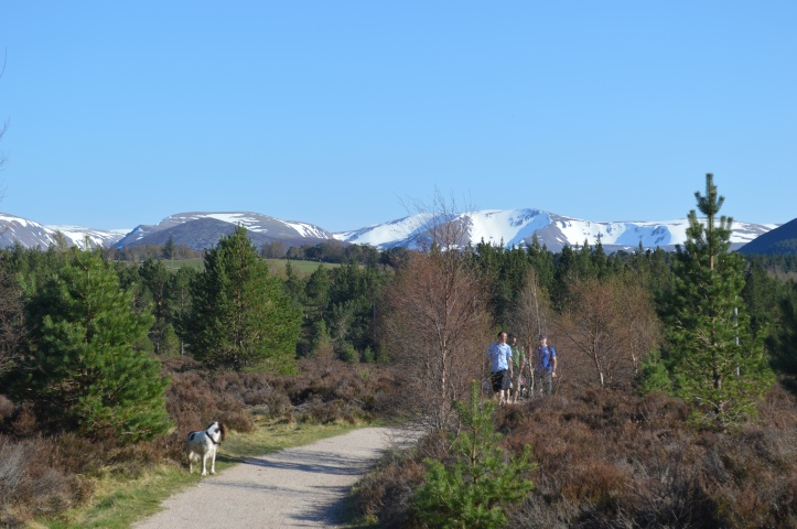Walking on Rothiemurchus. The Cairngorm region is a great place for a staycation. Lots of family fun to do including walking, biking and horse riding.